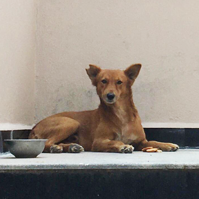 Browny – Scared of humans but connects with love